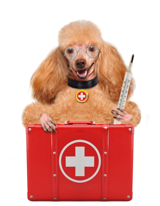 dog holding medical equipment