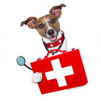 dog holding medical kit box
