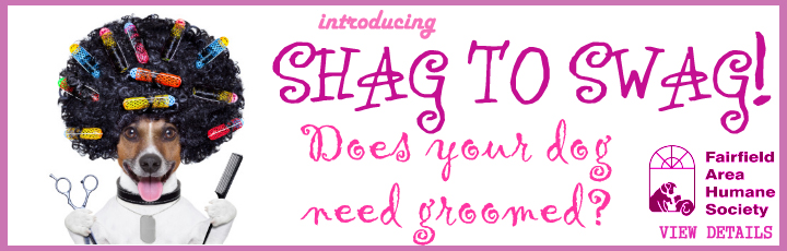 Fairfield Area Humane Society - Shag to Swag - Grooming Event
